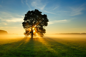 Tree in field with sunrise